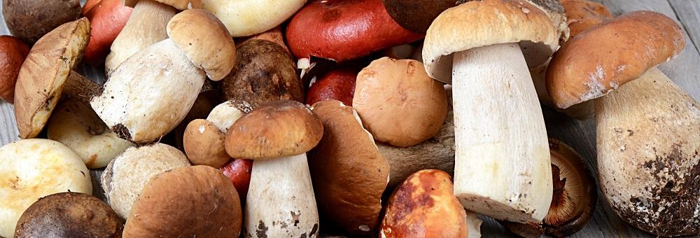 paddenstoelenmix1
